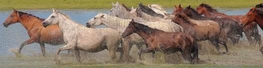 Justhorses